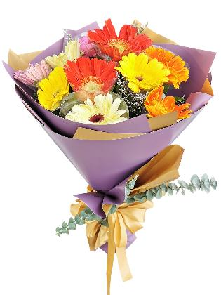MIX Gerbera Korean Purple Gold