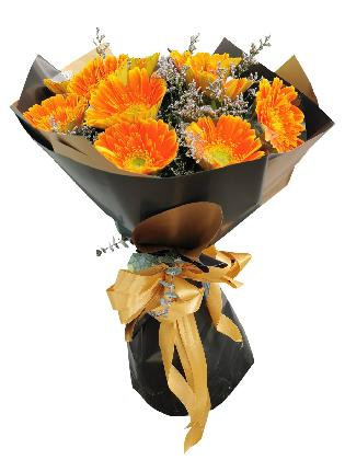 ORANGE Gerbera Black Gold