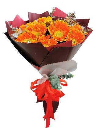 ORANGE Gerbera Korean Maroon White