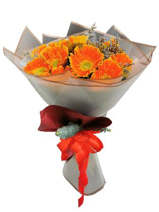 ORANGE Gerbera White Maroon