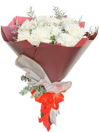 WHITE Carnation Korean Maroon White