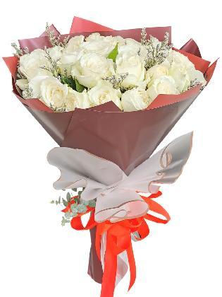 White Rose 24/36 Maroon White