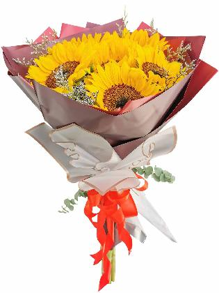 Sunflower Maroon White
