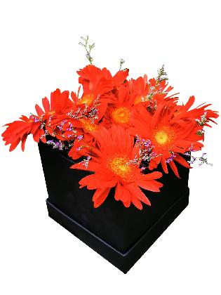 51 Red Gerbera Love Box