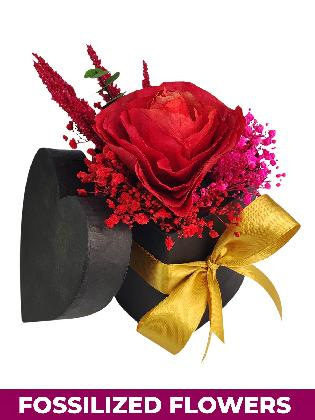 Dried Red Rose